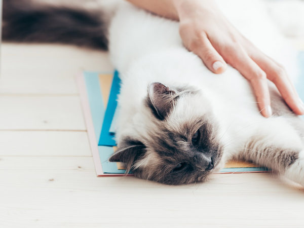 litiere chat femme enceinte