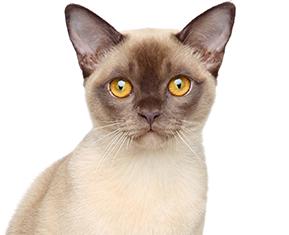 Anima Plus | Établissements vétérinaires au Québec